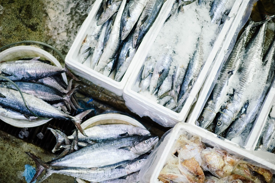 https://www.gov.uk/government/news/new-financial-support-for-the-uks-fishing-businesses-that-export-to-the-eu